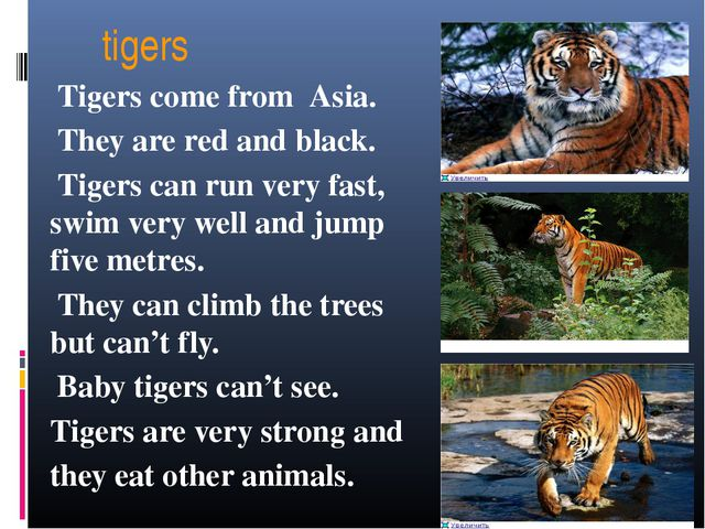 tigers Tigers come from Asia. They are red and black. Tigers can run very fa...