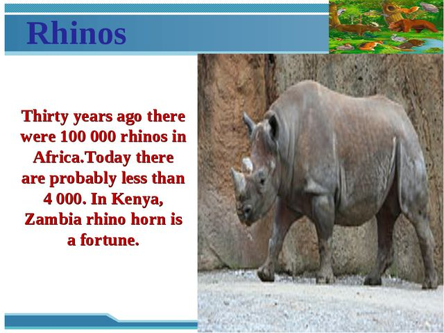 Rhinos Thirty years ago there were 100 000 rhinos in Africa.Today there are p...