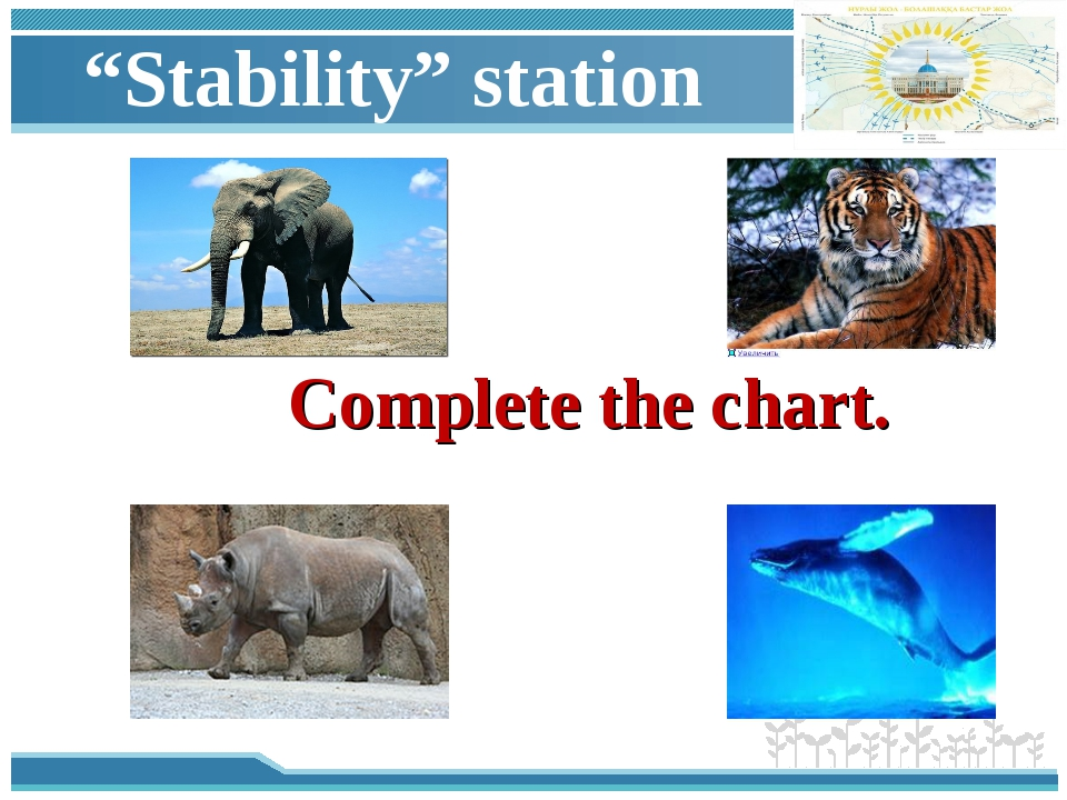 """""""Stability"""" station Complete the chart."""
