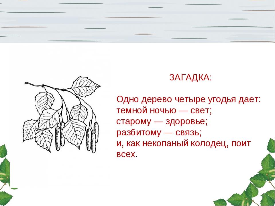 ЗАГАДКА: Одно дерево четыре угодья дает: темной ночью — свет; старому — здор...