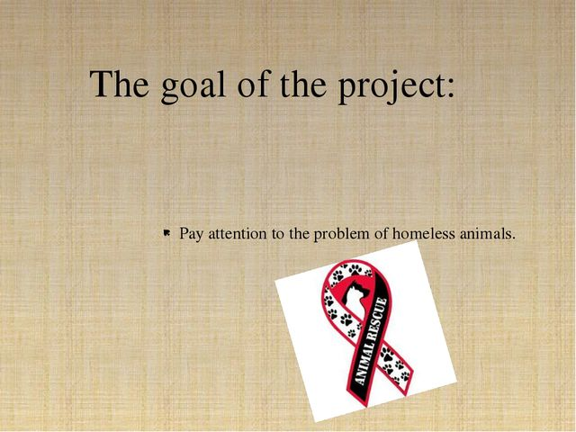 Pay attention to the problem of homeless animals. The goal of the project: