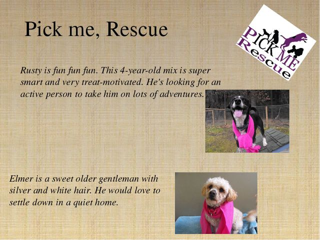 Rusty is fun fun fun. This 4-year-old mix is super smart and very treat-motiv...