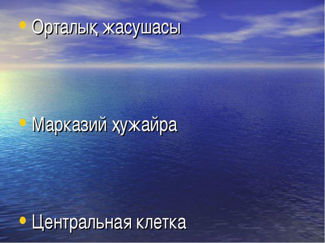Орталық жасушасы Марказий ҳужайра Центральная клетка