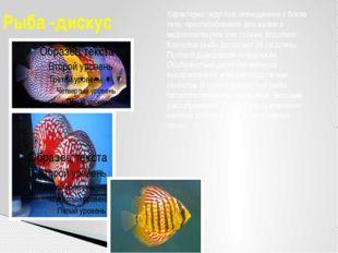 Рыба -дискус Характерно округлое, сплющенное с боков тело, приспособленное дл