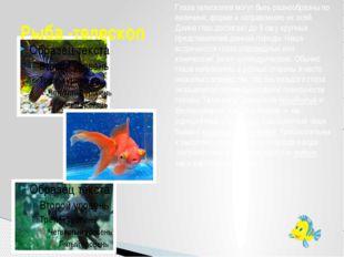 Рыба -телескоп Глаза телескопов могут быть разнообразны по величине, форме и