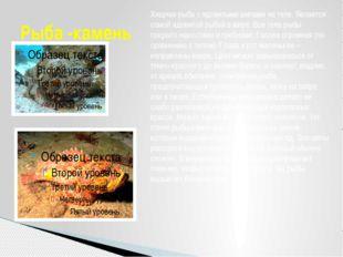Рыба -камень Хищная рыба с ядовитыми шипами на теле. Является самой ядовитой