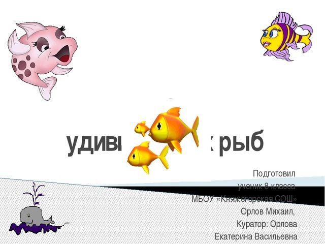 20 удивительных рыб Подготовил ученик 8 класса МБОУ «Княжегорская СОШ» Орлов...