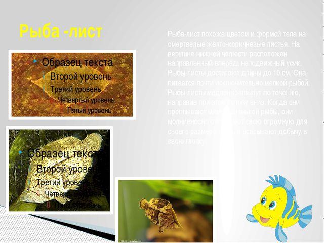 Рыба -лист Рыба-лист похожа цветом и формой тела на омертвелые жёлто-коричнев...