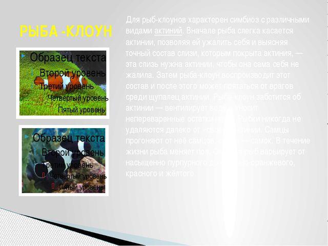 РЫБА -КЛОУН Для рыб-клоунов характерен симбиоз с различными видамиактиний. В...