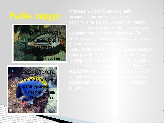Рыба- хирург Отличительной особенностьюрыб-хирурговявляются острые шипы, ра...