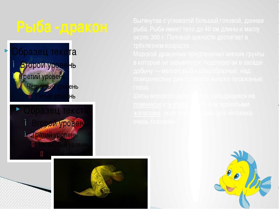Рыба -дракон Вытянутая с угловатой большой головой, донная рыба. Рыба имеет т...