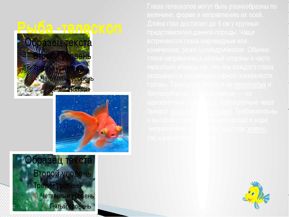 Рыба -телескоп Глаза телескопов могут быть разнообразны по величине, форме и...