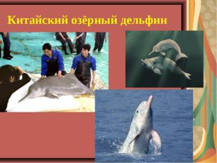 Китайский озёрный дельфин