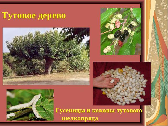 Тутовое дерево Гусеницы и коконы тутового шелкопряда