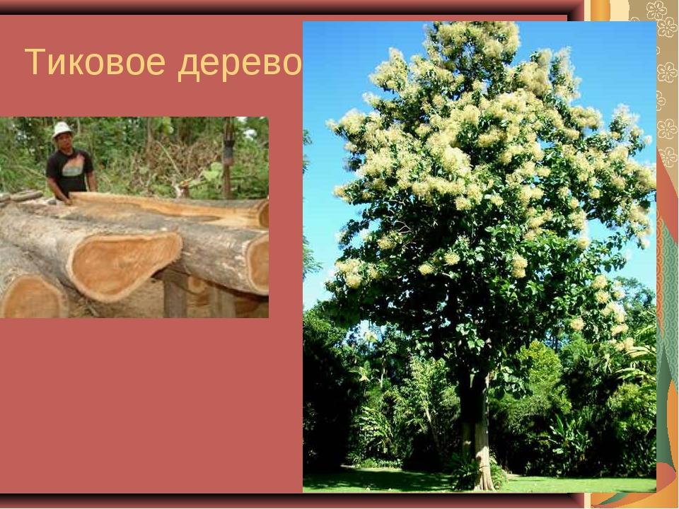 Тиковое дерево