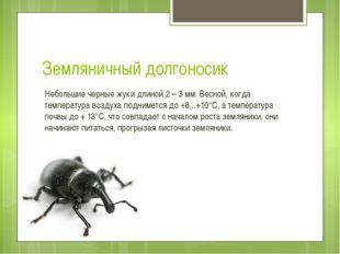 Земляничный долгоносик Небольшие черныежукидлиной 2 – 3 мм. Весной, когда т