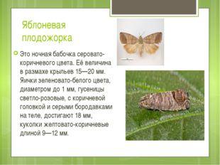 Яблоневая плодожорка Это ночная бабочка серовато-коричневого цвета. Её величи