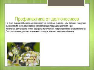 Профилактика от долгоносиков Не стоит выращивать малину и землянику на соседн