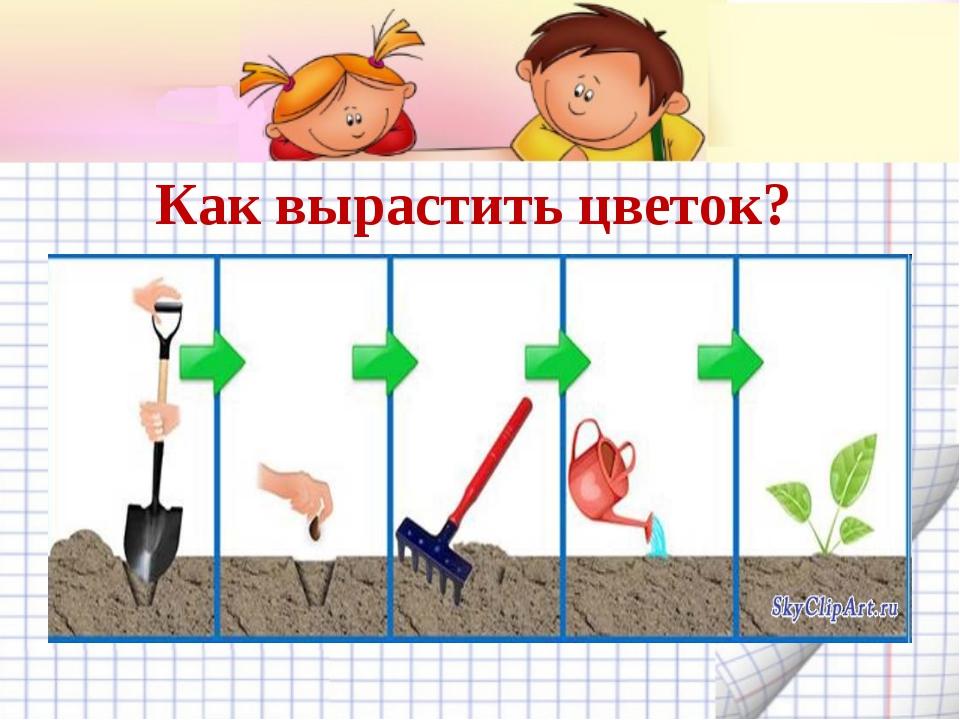 Как вырастить цветок?