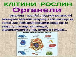 Органели – постійні структури клітини, які виконують властиві їм функції і к