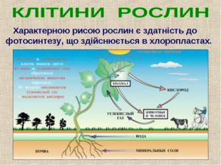 Характерною рисою рослин є здатність до фотосинтезу, що здійснюється в хлоро