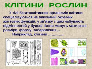 У тілі багатоклітинних організмів клітини спеціалізуються на виконанні окрем