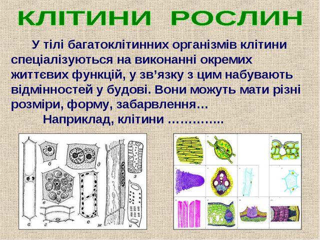 У тілі багатоклітинних організмів клітини спеціалізуються на виконанні окрем...