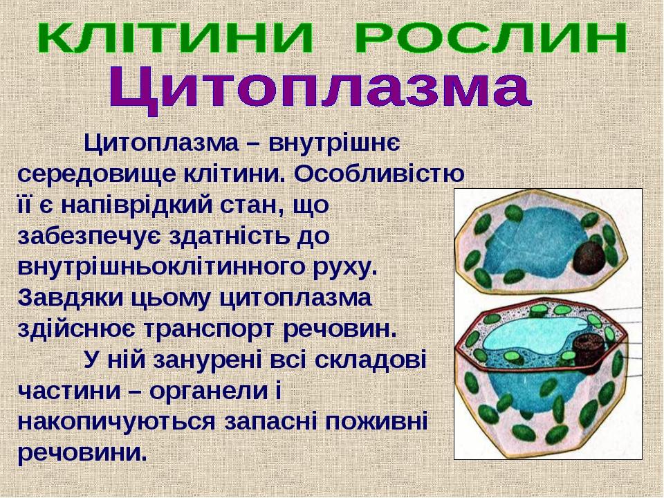Цитоплазма – внутрішнє середовище клітини. Особливістю її є напіврідкий стан...