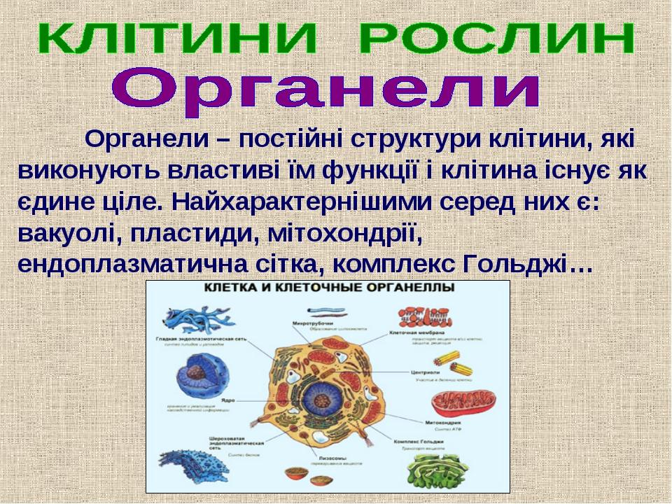 Органели – постійні структури клітини, які виконують властиві їм функції і к...