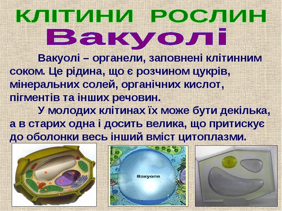 Вакуолі – органели, заповнені клітинним соком. Це рідина, що є розчином цук...