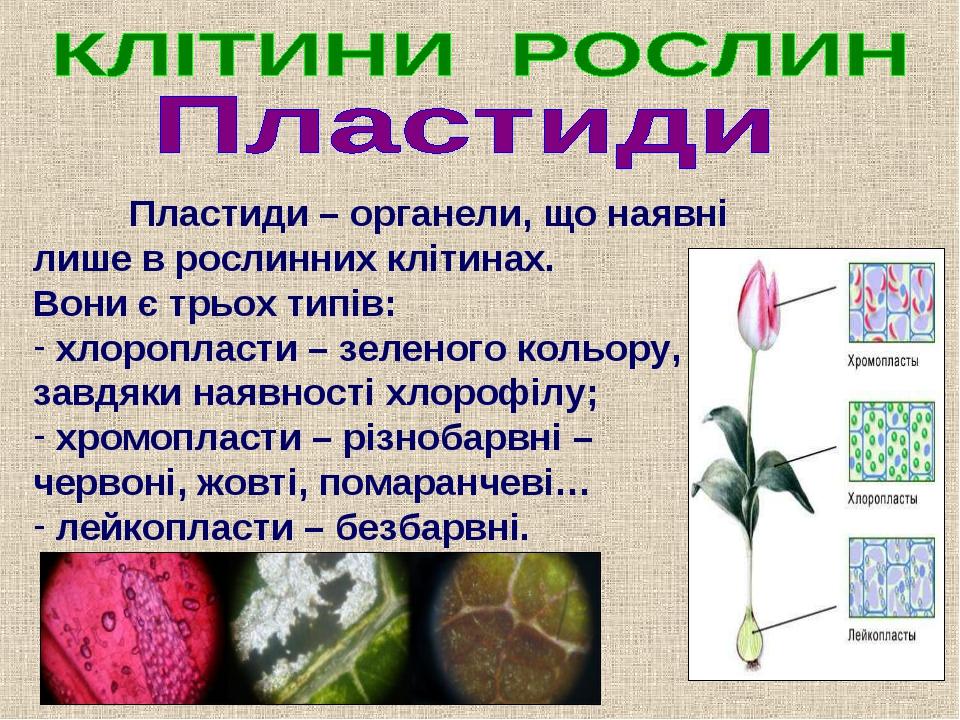 Пластиди – органели, що наявні лише в рослинних клітинах. Вони є трьох типів...