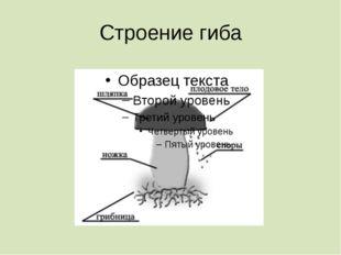 Строение гиба