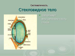 Систематичность. Стекловидное тело Заполняет внутреннюю часть глаза.