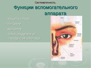 Систематичность. Функции вспомогательного аппарата - защита глаза - питание -