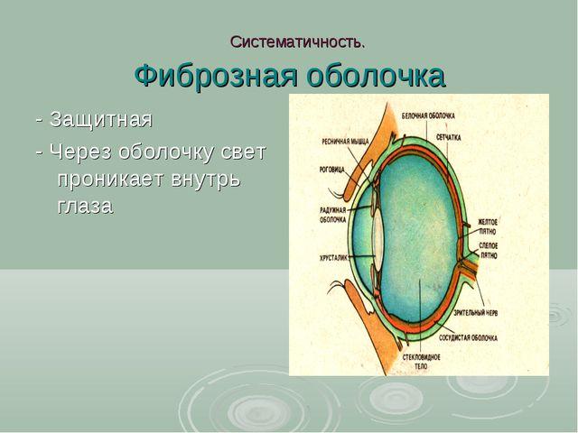 Систематичность. Фиброзная оболочка - Защитная - Через оболочку свет проника...