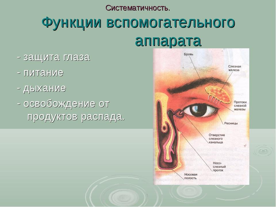 Систематичность. Функции вспомогательного аппарата - защита глаза - питание -...