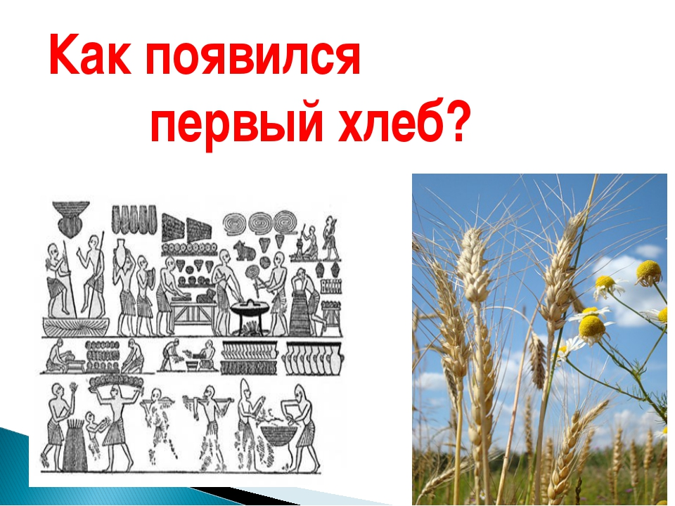 Как появился первый хлеб?