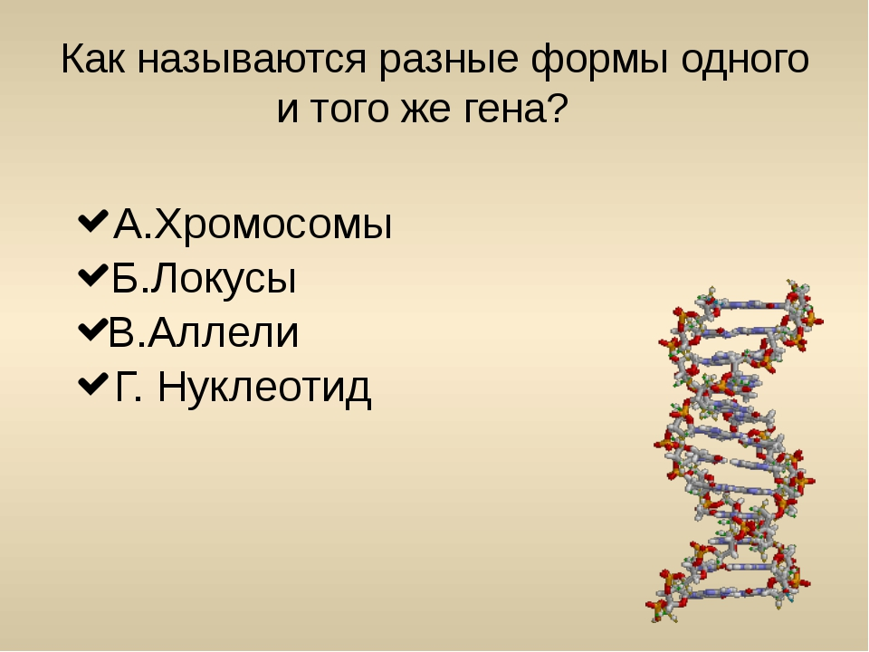 Как называется организм, который развился в результате скрещивания генетическ...