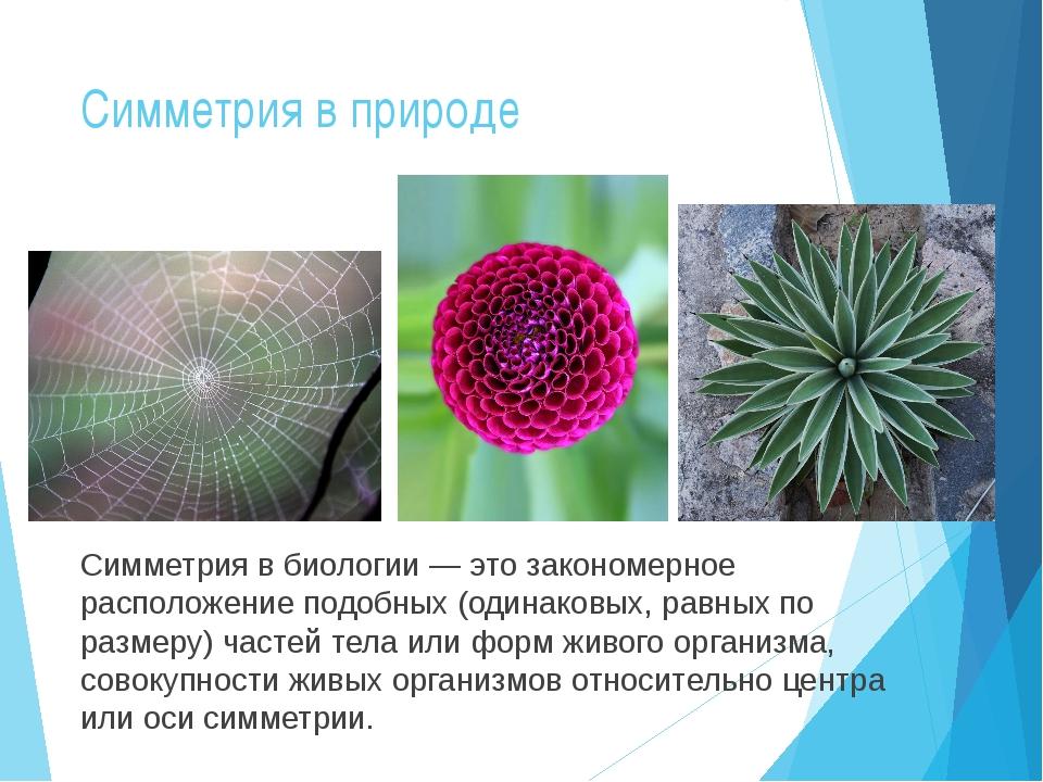 Симметрия в природе Симметрия в биологии — это закономерное расположение подо...