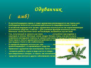Одуванчик (Җамб) В научной медицине корень и трава одуванчика рекомендуются