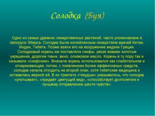 Солодка (Буя) Одно из самых древних лекарственных растений, часто упоминаемое