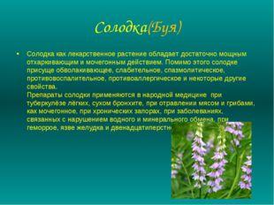 Солодка(Буя) Солодка как лекарственное растение обладает достаточно мощным от