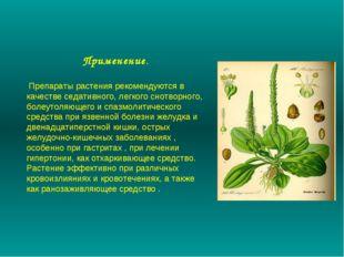 Применение. Препараты растения рекомендуются в качестве седативного, легкого