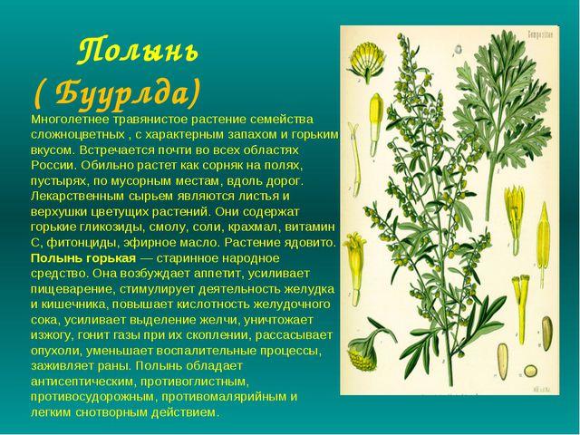 Полынь ( Буурлда) Многолетнее травянистое растение семейства сложноцветных...
