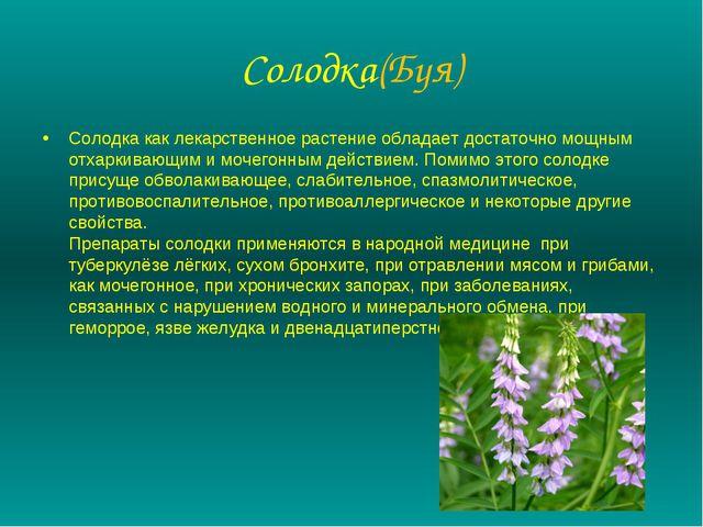 Солодка(Буя) Солодка как лекарственное растение обладает достаточно мощным от...
