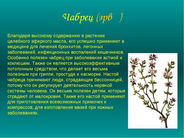 Чабрец (эрвң) Благодаря высокому содержанию в растении целебного эфирного мас...