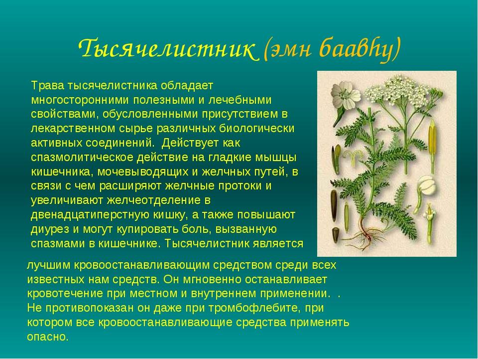 Тысячелистник (эмн баавhу) Трава тысячелистника обладает многосторонними поле...