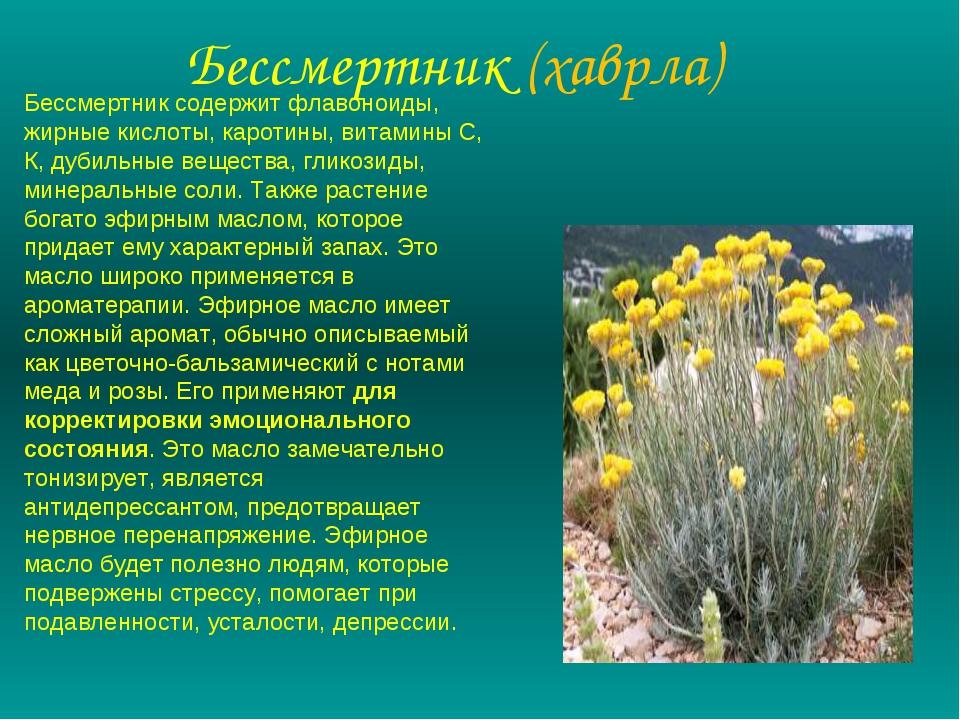 Бессмертник (хаврла) Бессмертник содержит флавоноиды, жирные кислоты, каротин...