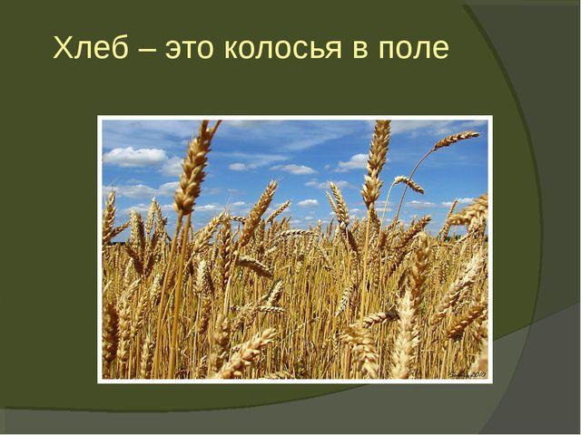 Хлеб – это колосья в поле