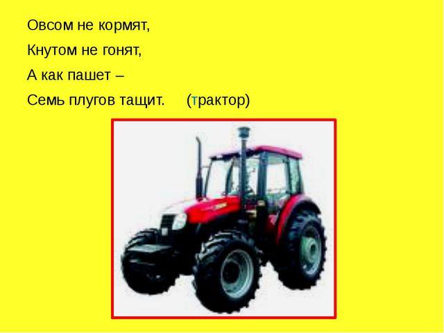 Овсом не кормят, Кнутом не гонят, А как пашет – Семь плугов тащит. (трактор)